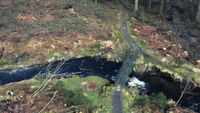 drone view of footbridge in scottish forest - forestry industry stock videos & royalty-free footage
