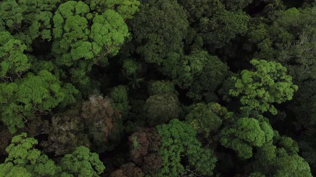 drone view of forest canopy - bush stock videos & royalty-free footage