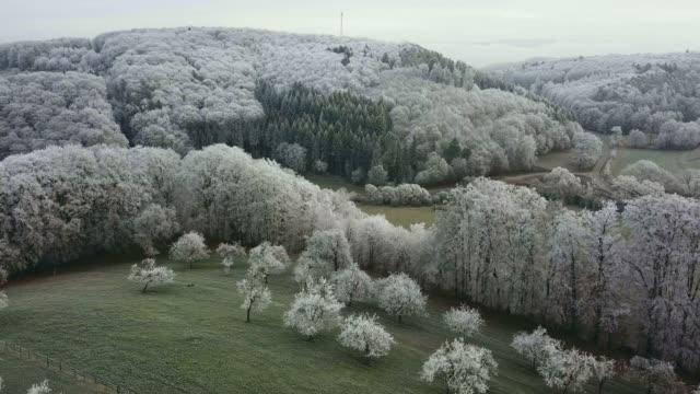 drone view of forest in winter, saargau near kastel-staadt, rhineland palatinate, germany, europe - rhineland palatinate stock videos & royalty-free footage
