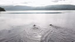 Drone view of open water swimmers swimming in a Scottish loch