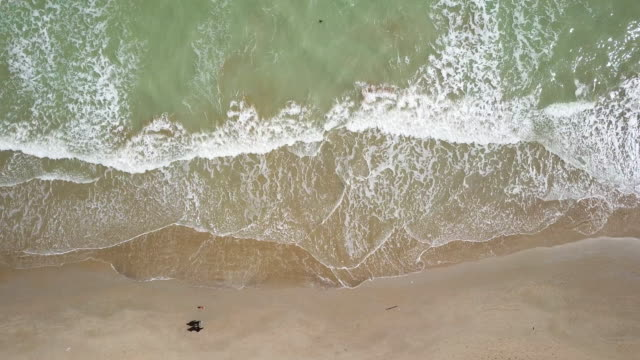 drone view of person walks with his dog on the beach - sabbia video stock e b–roll