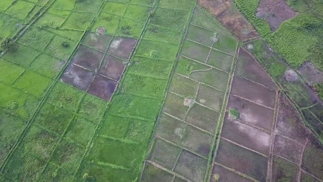 drone view of rice fields in ivory coast - côte d'ivoire stock videos & royalty-free footage
