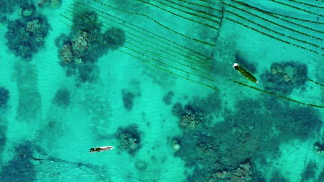 ボートから働く海藻農家のドローンビュー - 海草点の映像素材/bロール