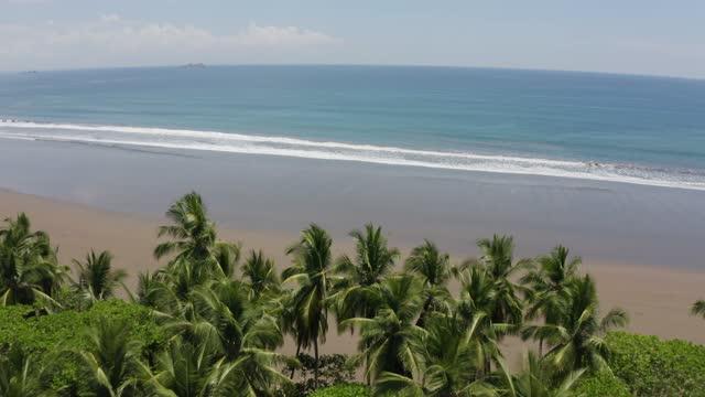 vídeos de stock, filmes e b-roll de drone view of the beach at ballena national marine park, costa rica - árvore tropical