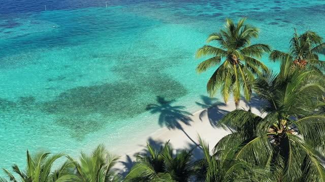 vidéos et rushes de vue drone de l'île tropicale et des palmiers - station de vacances
