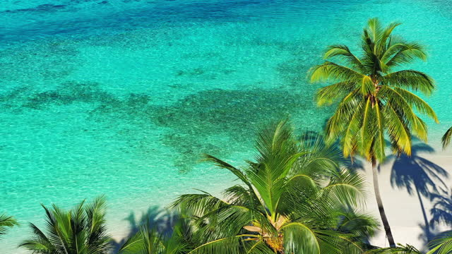 drone view of the tropical island and palm trees - reef stock videos & royalty-free footage
