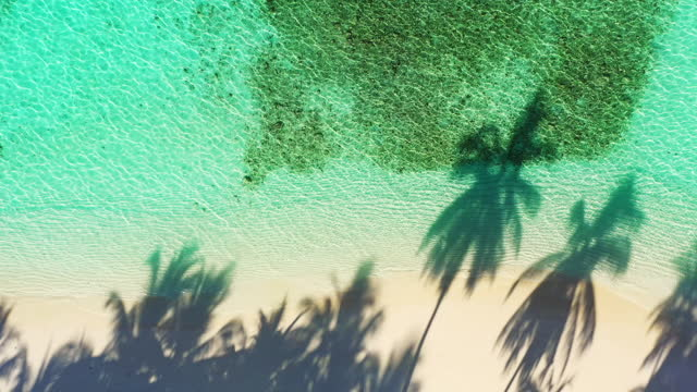 drone view of the tropical island and palm trees - tourist resort stock videos & royalty-free footage