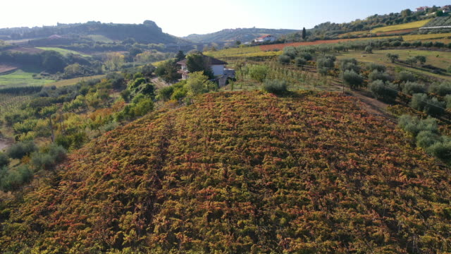 drone view of vineyard with grape used to make montepulciano, in abruzzo, italy, on october 23, 2019. italian wine exports in the first five months... - 6 11 months stock videos & royalty-free footage
