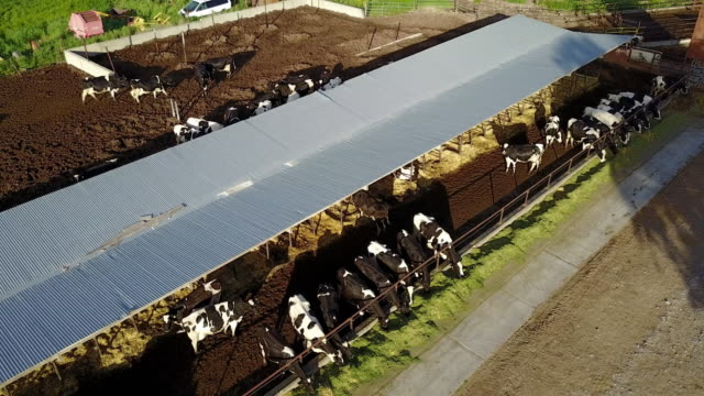Drone view on the dairy farm in Utah, USA