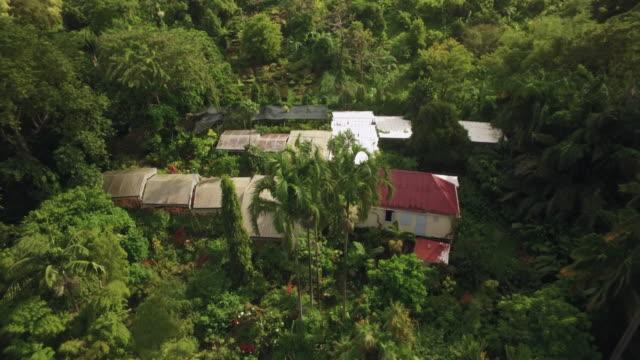 drone view over st. rose nursery tropical garden, grenada, west indies, caribbean, central america - tropiskt träd bildbanksvideor och videomaterial från bakom kulisserna