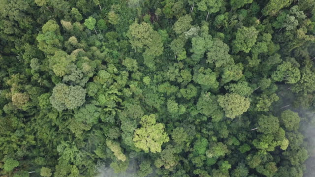 drone view tropical forest morning cameron highland - tropical tree stock videos & royalty-free footage