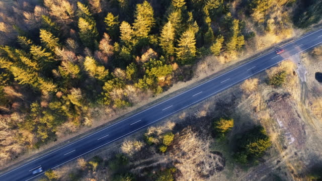 Dronefootage of road going through a forest