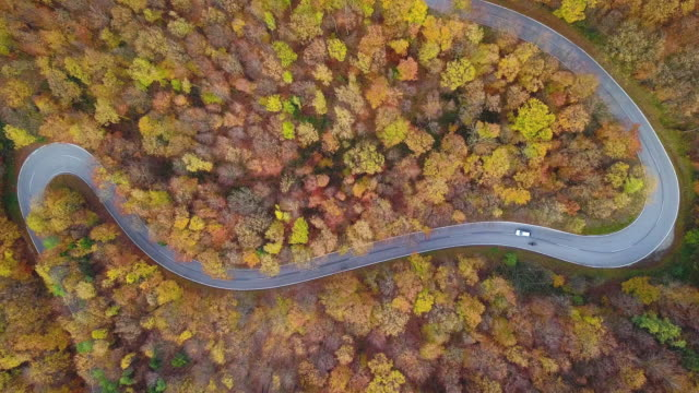 Drones: an aerial road trip - 4K aerial view curvy road through wood in autumn