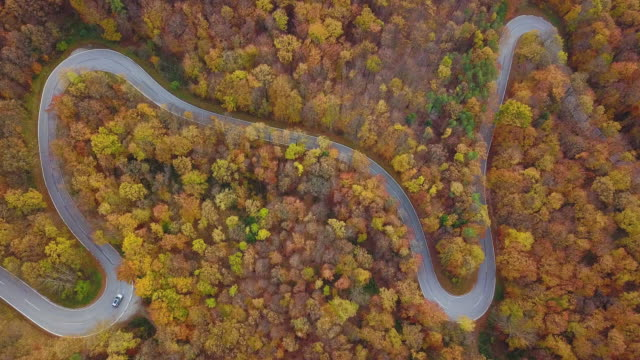 drones: an aerial road trip - 4k aerial view still country road in autumn forest - winding road stock videos & royalty-free footage