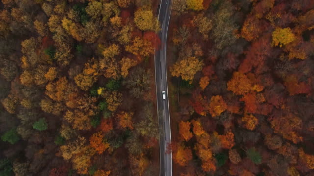 vídeos de stock, filmes e b-roll de drones: an aerial road trip - 4k aerial view video following car on road through forest - outono