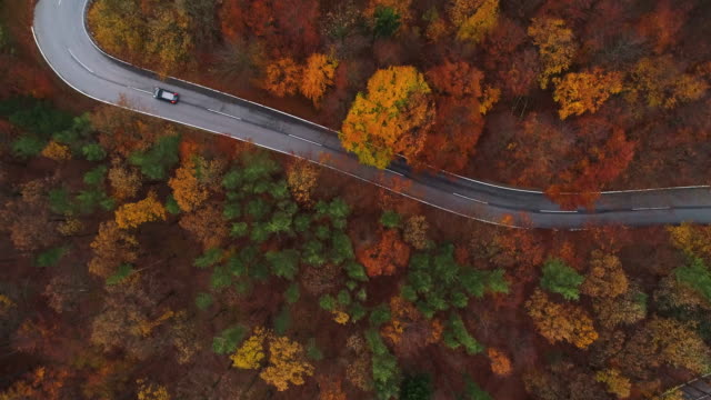 Drones: an aerial road trip - 4k aerial view video winding road in colorful wood