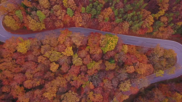 Drones: an aerial road trip - 4K colorful trees autumn road aerial view