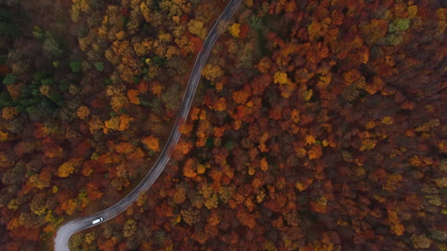 Drones: an aerial road trip - 4k drone point of view country road in autumn forest