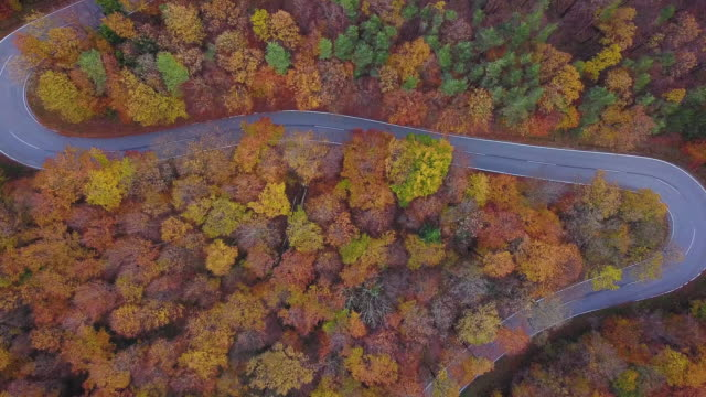 Drones: an aerial road trip - country road autumn trees aerial 4k