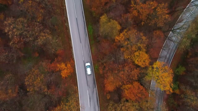 Drones: an aerial road trip - flying above winding road in autumn forest 4k