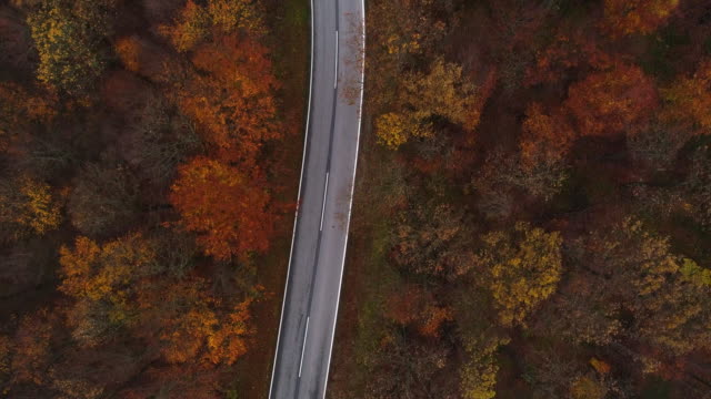 Drones: an aerial road trip - flying directly aboce country road in forest 4K
