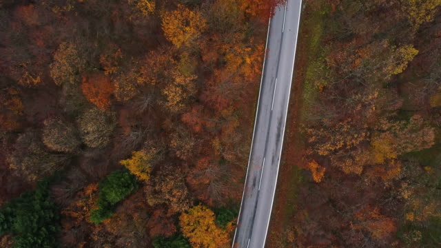 Drones: an aerial road trip - flying over country road through forest in autumn 4K
