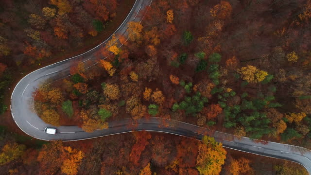 Drones: an aerial road trip - flying over curvy road in forest 4K