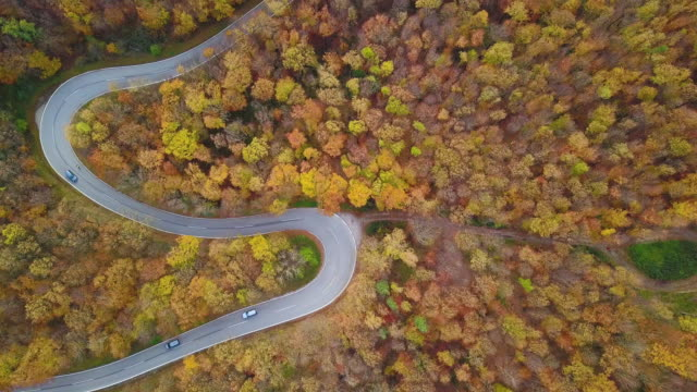 Drones: An Aerial Road Trip - flying over lane in forest