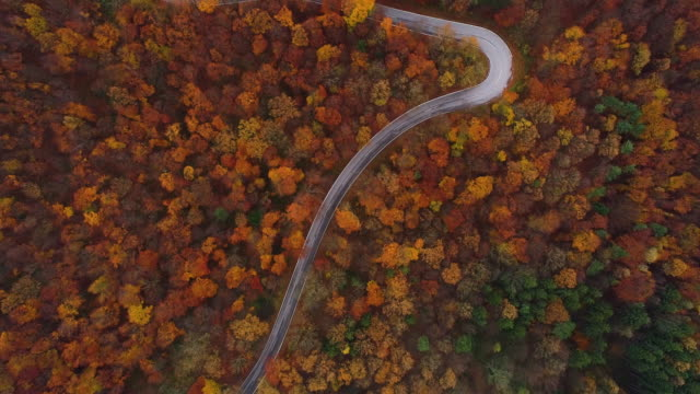 Drones: an aerial road trip - flying over winding road in autumn forest 4k