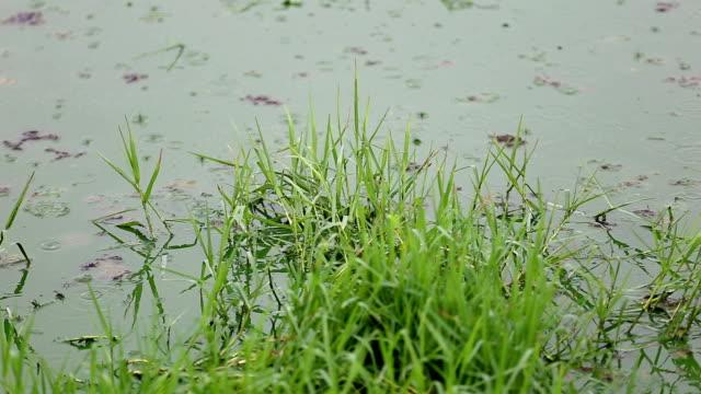 Drop of rain in dirty water