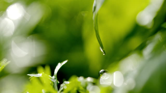 slo mo ecu 緑の葉から落ちる水の滴 - 雨粒点の映像素材/bロール