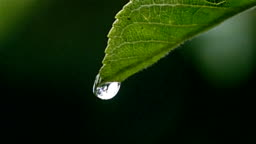 A drop on a leaf falls in large