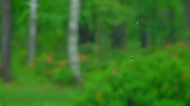 Droplet in Car Window