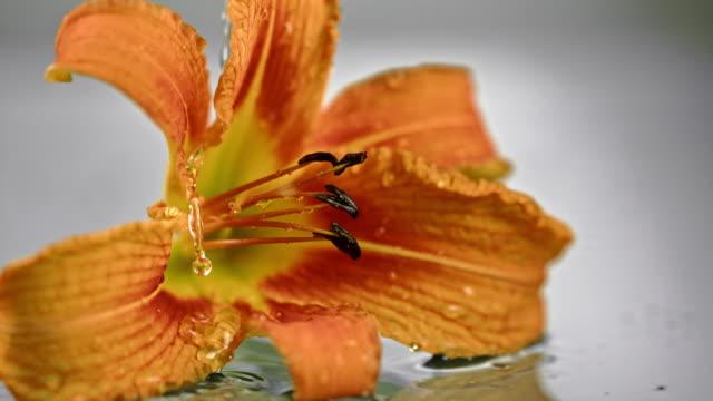 SLO MO druppels vallen op het hoofd van een bloem