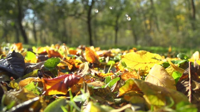 hd super slow-mo: drops falling over autumn leaves - reversing stock videos & royalty-free footage