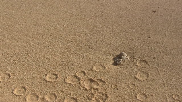 Drops in sand surface