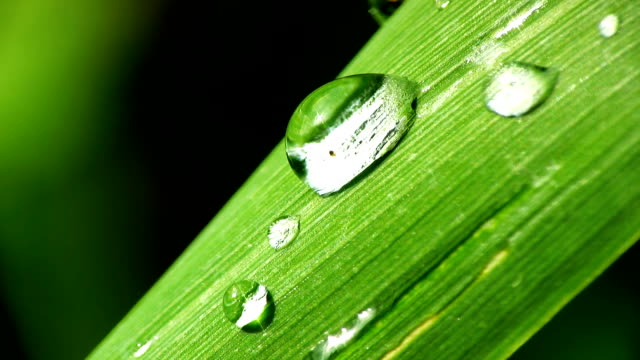 hd macro: drops of dew - leaf vein stock videos and b-roll footage