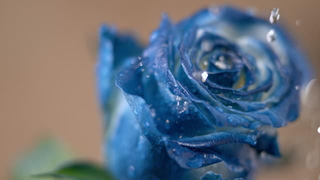 slo mo tu は青いバラに降る雨の滴します。 - 葉点の映像素材/bロール