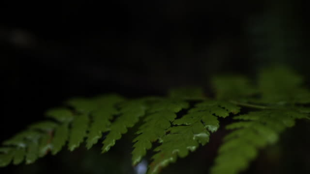 drops of water drip onto fern frond. - frond stock videos & royalty-free footage