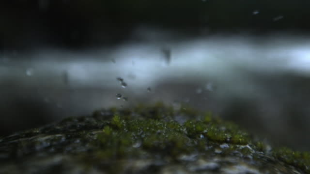 Drops of water fall onto moss.