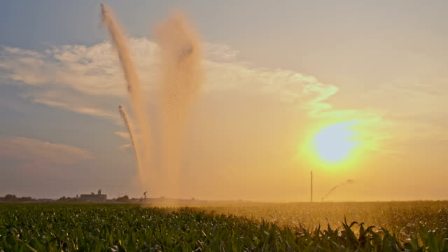 slo mo drops of water irrigating a cornfield - squirting stock videos and b-roll footage