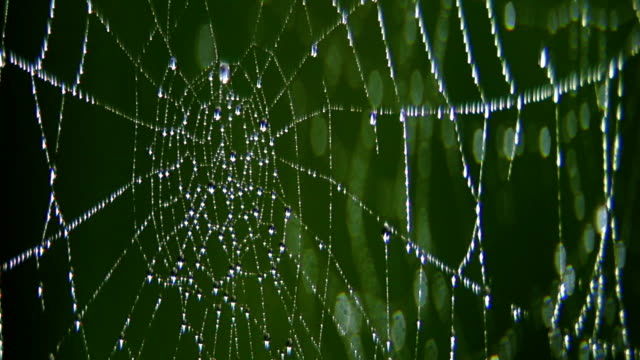 Drops of water on cobwebs.