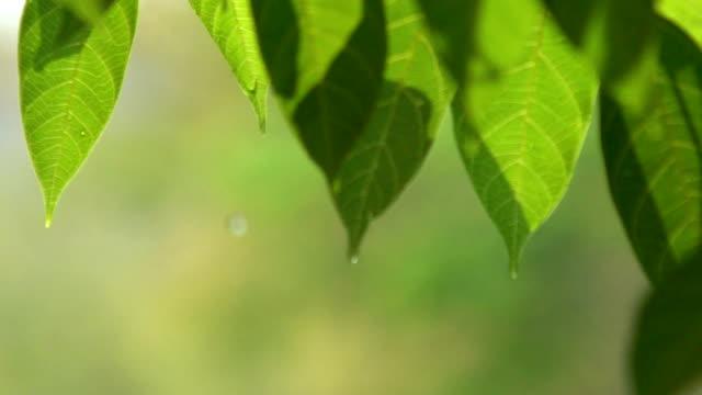 降下の葉 - 濡れている点の映像素材/bロール
