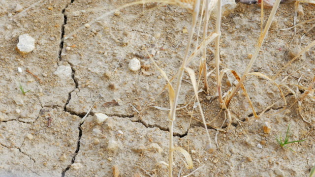 pan drought affected barley field close-up (uhd) - eroded stock videos & royalty-free footage