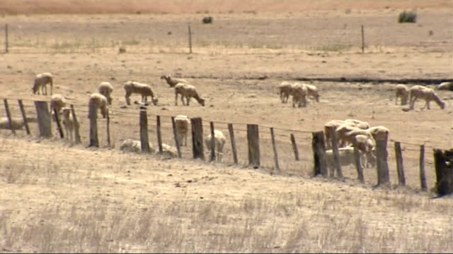 drought threat to farmers; australia: new south wales: wagga wagga: ext dried and cracked earth in barren farmland landscape sheep crazin amongst... - drought stock videos & royalty-free footage