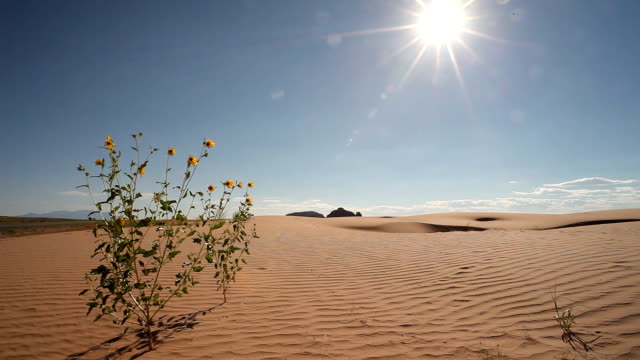 drought tolerant plant and sand dunes under sunlight - sanddüne stock-videos und b-roll-filmmaterial