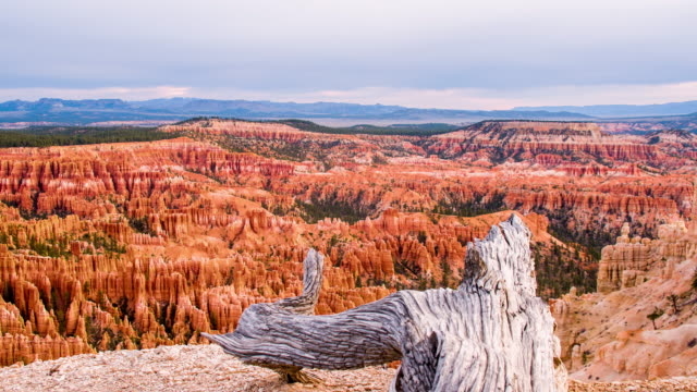 ds drought tree above the bryce canyon - bryce canyon stock videos and b-roll footage