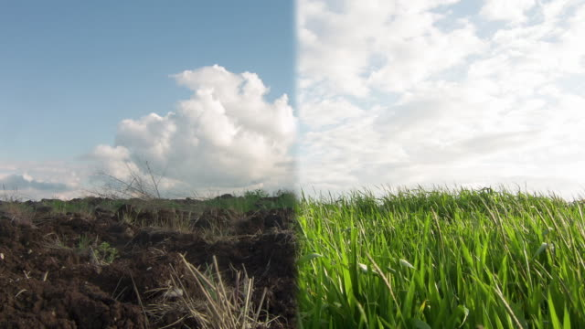 drought vs soil fertility - diseased plant stock videos and b-roll footage
