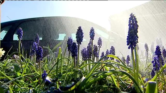 water companies accused of conflicting advice on hosepipe bans england wiltshire swindon ext low angle shot of blue grape hyacinth flowers being... - ヒヤシンス点の映像素材/bロール