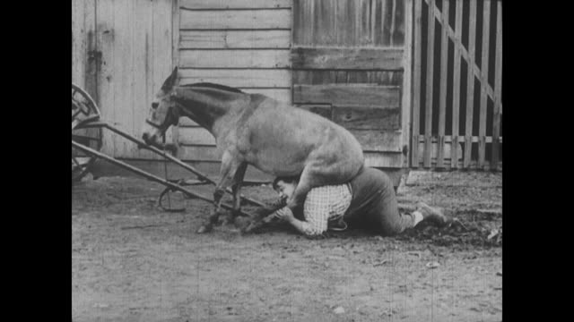 1917 a drug store clerk (fatty arbuckle) find himself trapped underneath a stubborn sitting mule - schieben stock-videos und b-roll-filmmaterial